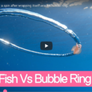 Amazing Footage Of Jelly Fish Spinning