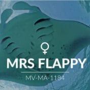 Adopt a Manta - Mrs Flappy